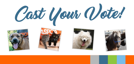 Help Choose Our Calendar Cover Photo. Cast Your Vote!