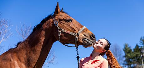 Equine Ambassador