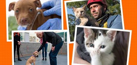 Vote For Your Favorite ASPCA Moment from 2018!