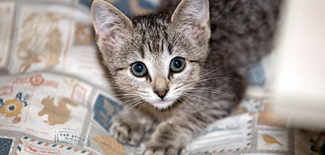 Submit Your Favorite Kitten Name!