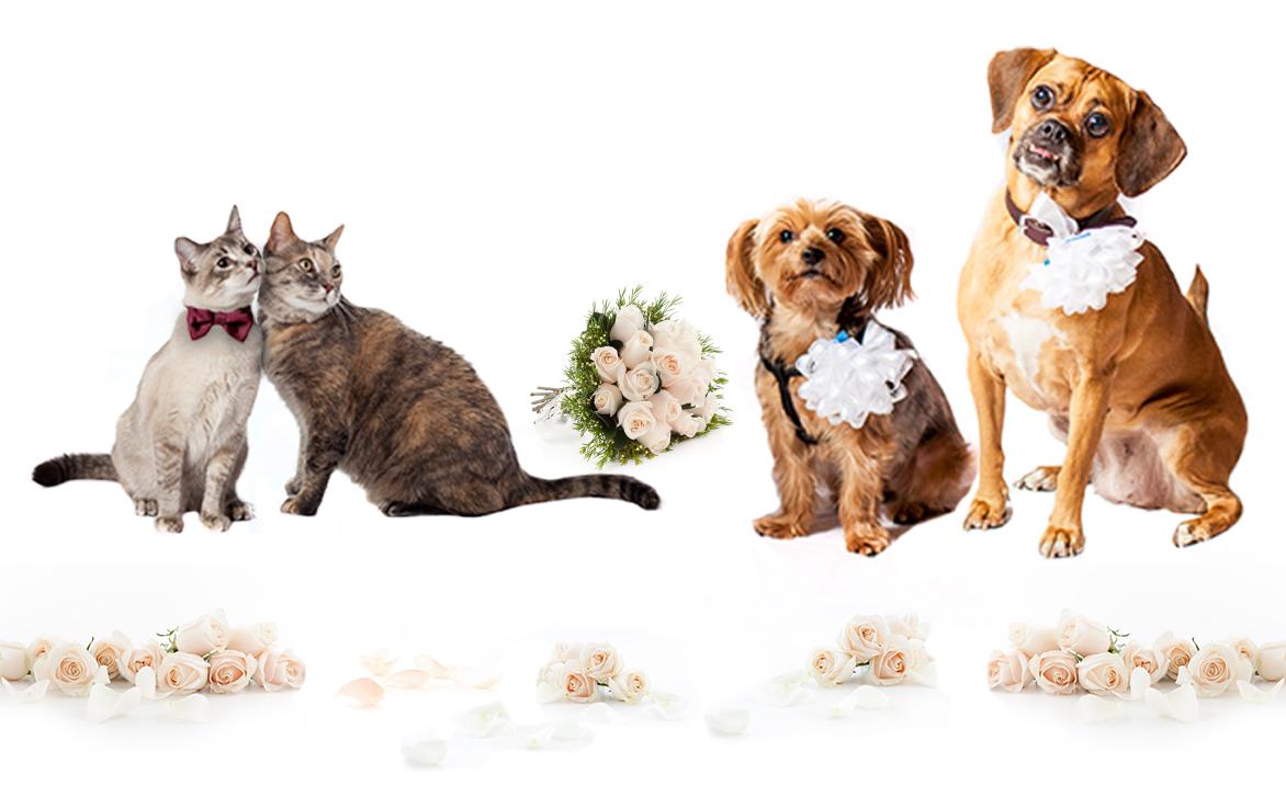Team ASPCA Wedding Campaign Registration