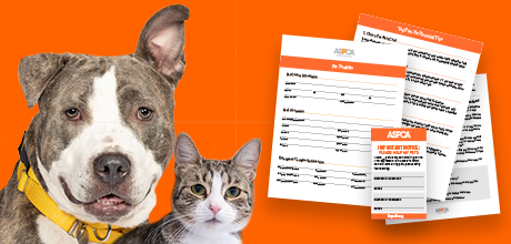 Prioritize their future with our FREE Pet Planning Packet