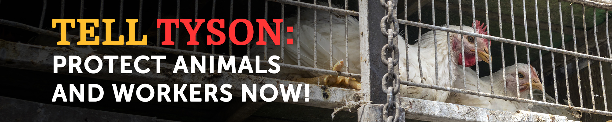 Tell Tyson: Protect Animals and Workers Now!