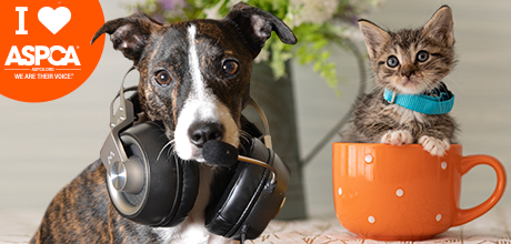 Share Your Love for Animals with ASPCA Virtual Backgrounds
