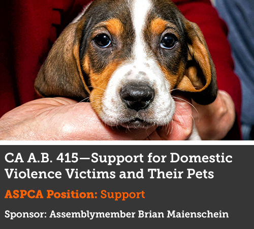 Support for Domestic Violence Victims and Their Pet