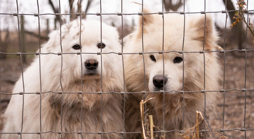 Dogs in cage