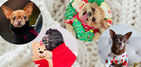 Vote for Your Favorite Cozy Sweater!