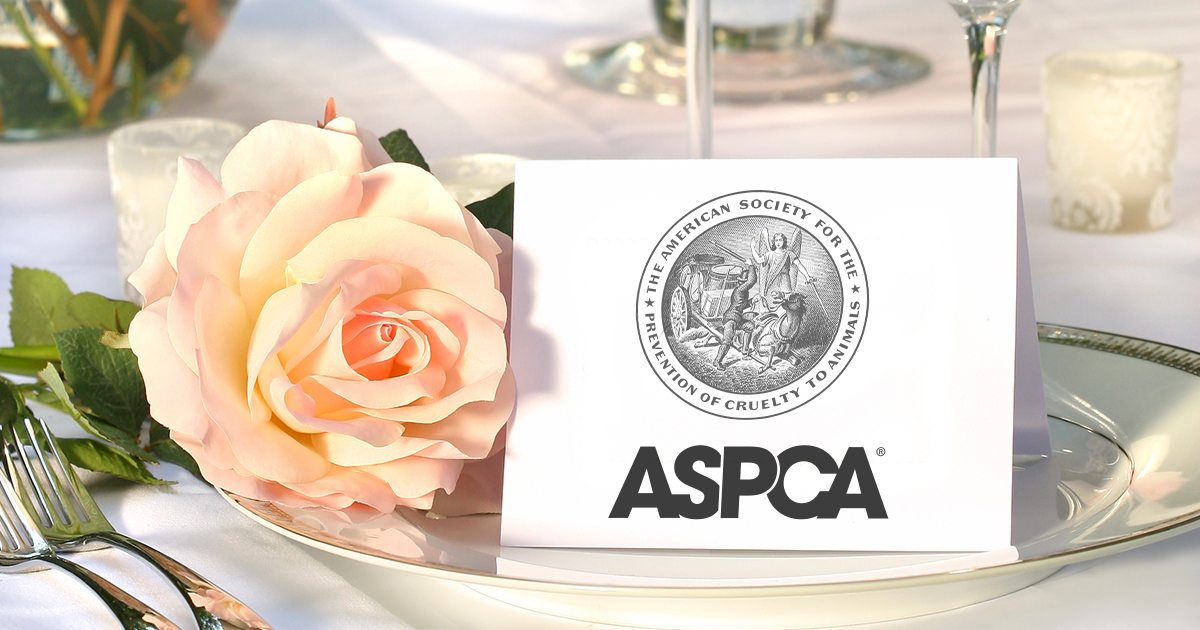 Typical Wedding Gift Amount: Wedding And Special Occasion Favors L Ways To Give L ASPCA