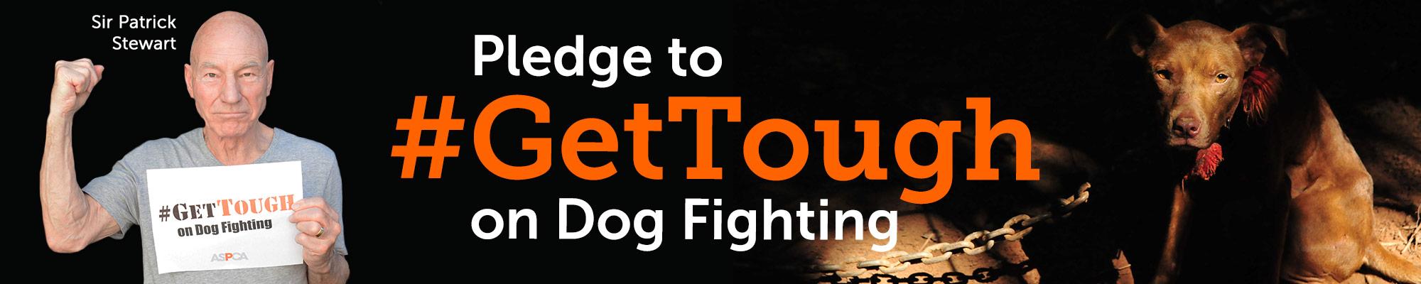 Get Tough On Dog Fighting