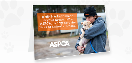 Aspca Christmas Cards 2020 Honor Gifts l Tribute l Send A Card l Ways To Give l ASPCA