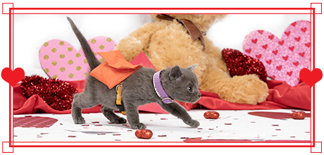 Send the Purr-fect Valentine's Day Greeting with a Kitty-gram!