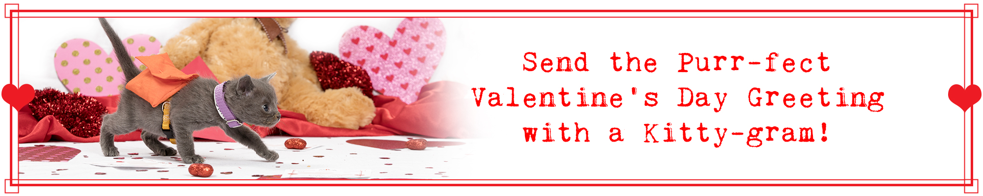 Send The Purr Fect Valentine S Day Greeting With A Kitty Gram Aspca