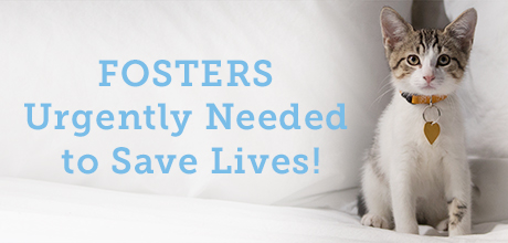 Fosters Urgently Needed to Save Lives! Be an ASPCA Foster Caregiver for Cats and Kittens