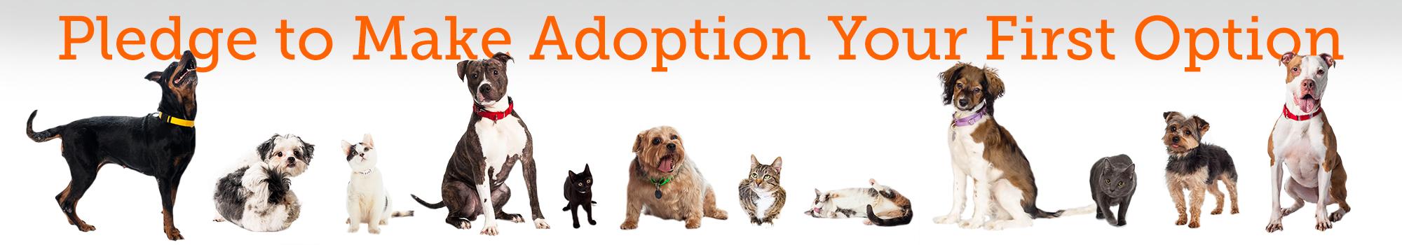 Pledge To Make Pet Adoption Your First Option L Aspca