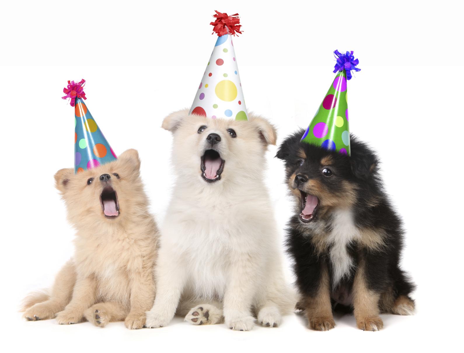 Bailey S Birthday Campaign Aspca