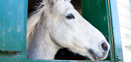 Help Raise the Barn for Horses in Need