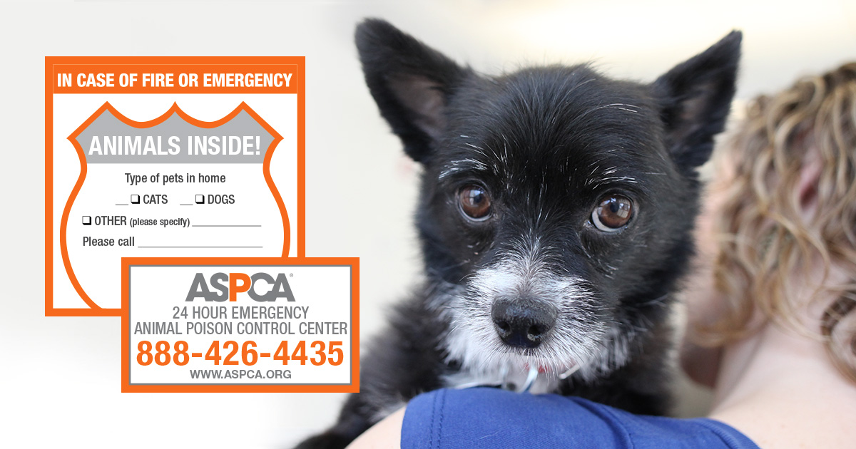Keep Pets Safe with Your Free ASPCA Pet Safety Pack