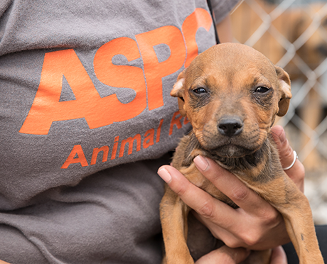 You're Officially an ASPCA Animal Supporter!
