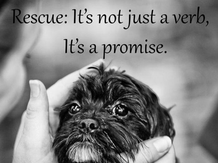 Rescued is my favorite breed | ASPCA