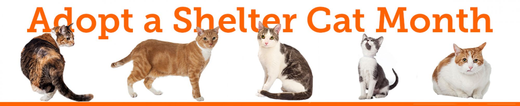 Adopt a Shelter Cat Month Campaign